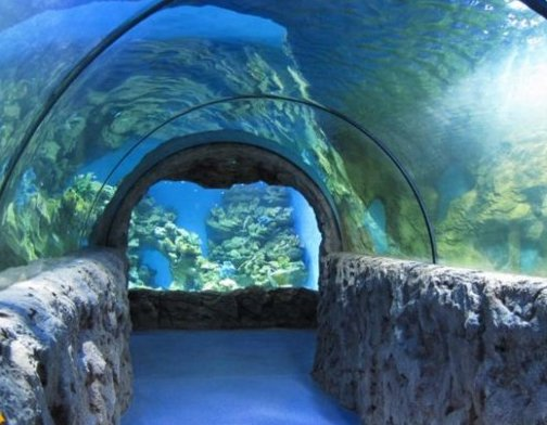 Лучший океанариум Москвы в 2021 году
